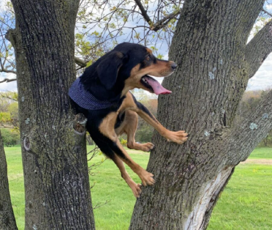 cane che si arrampica su albero