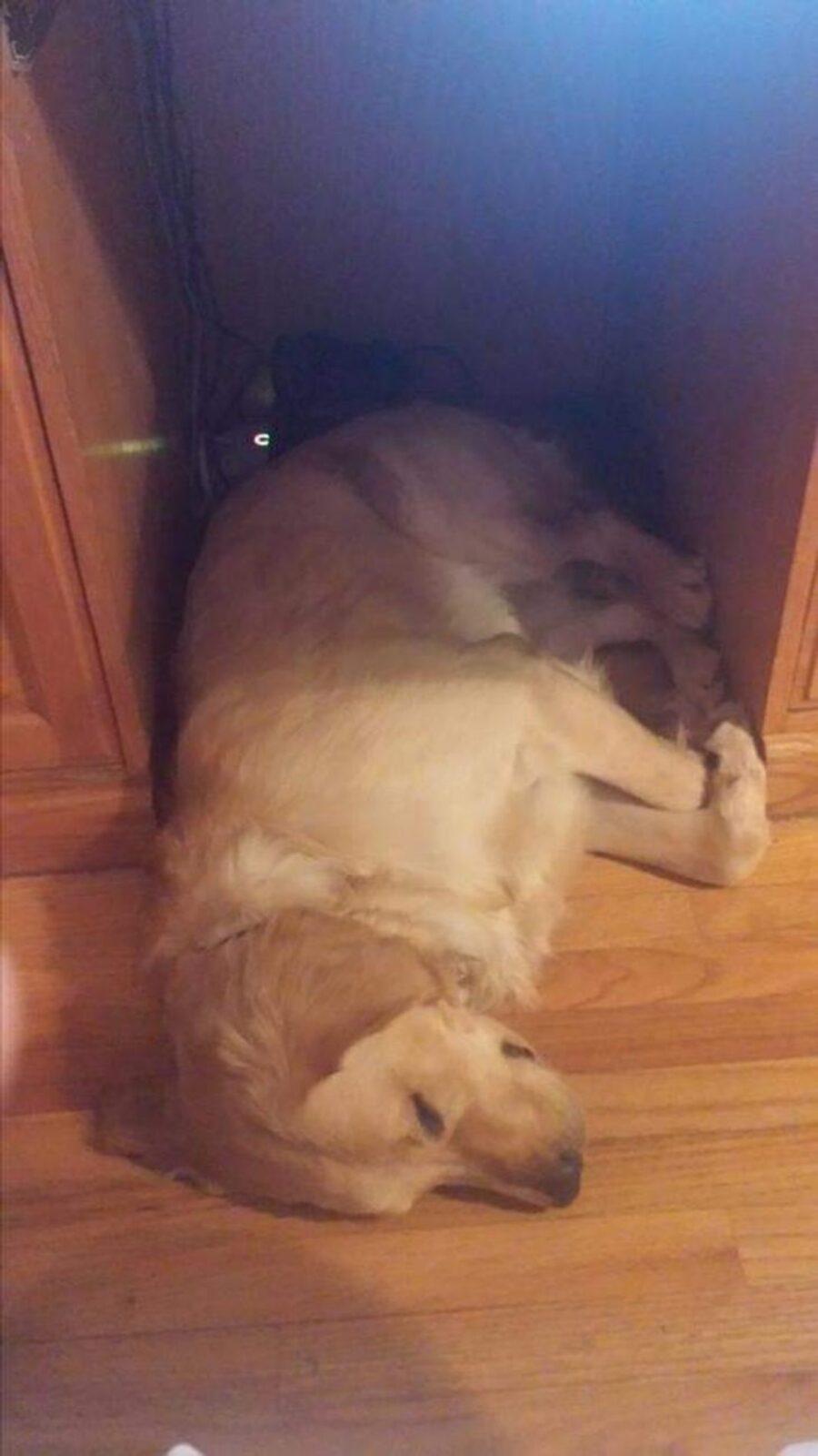 cucciolo sotto scrivania