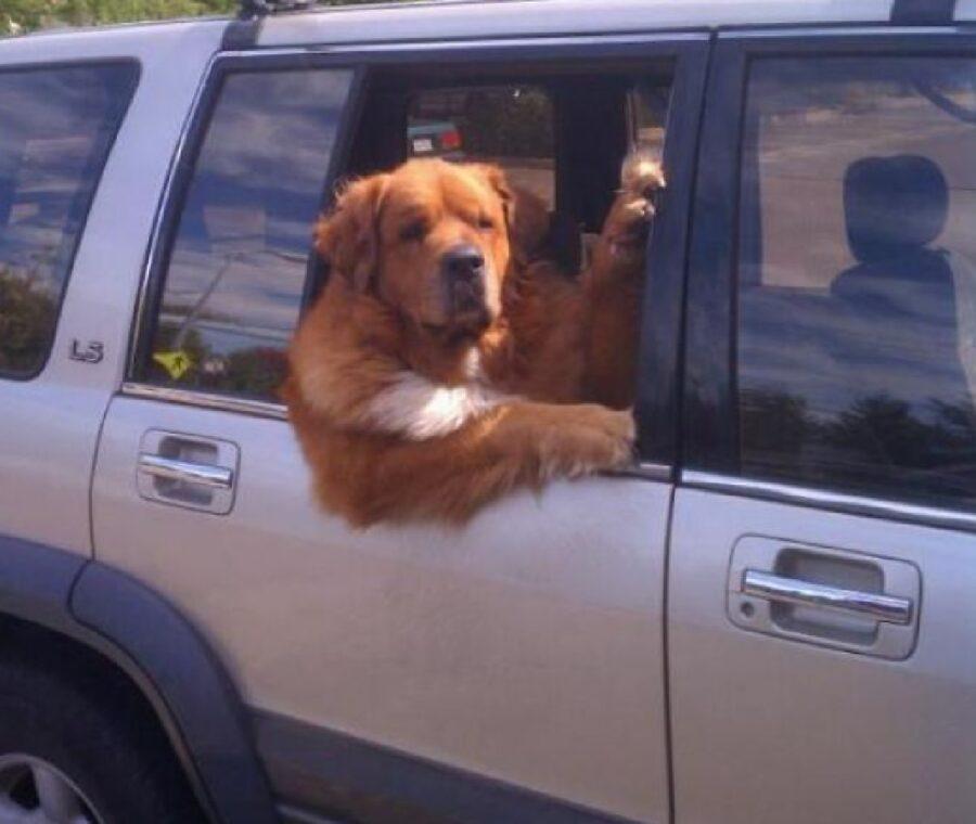 cane mette zampa fuori come umano