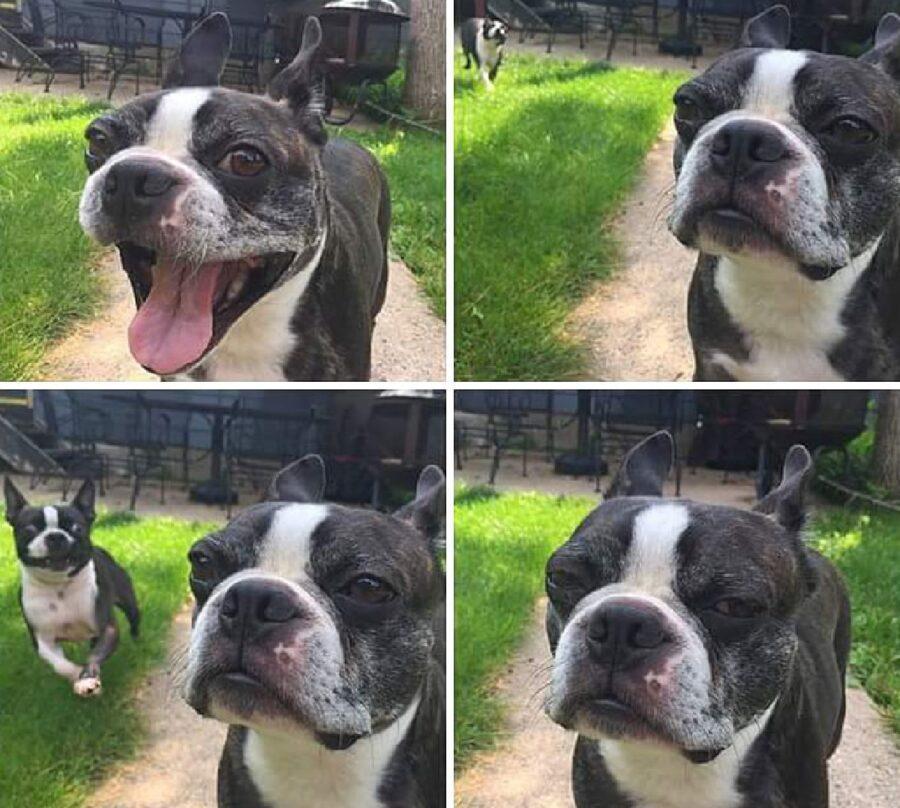 cucciolo felice fino a poco prima