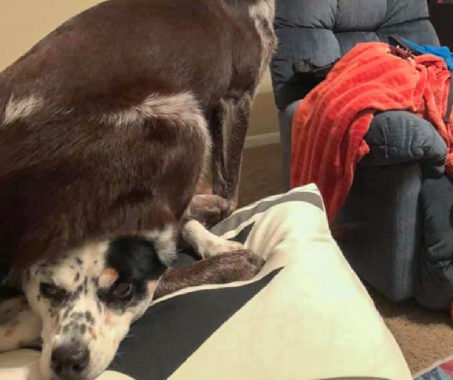 cane seduto sopra altro cane