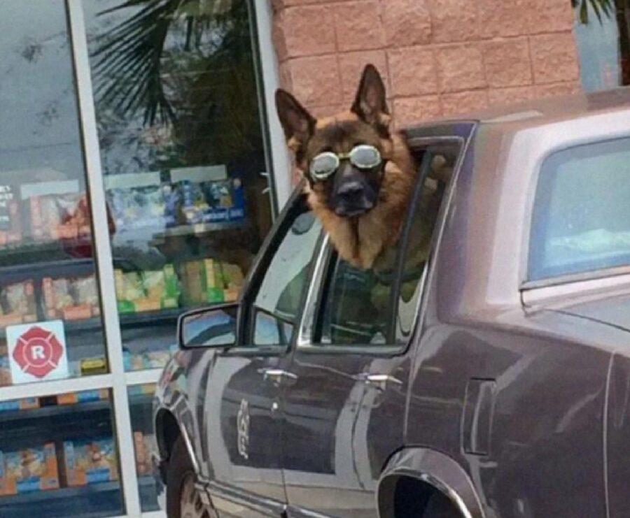 cane con occhiali si affaccia