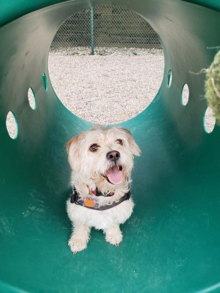 cane tunnel buffo