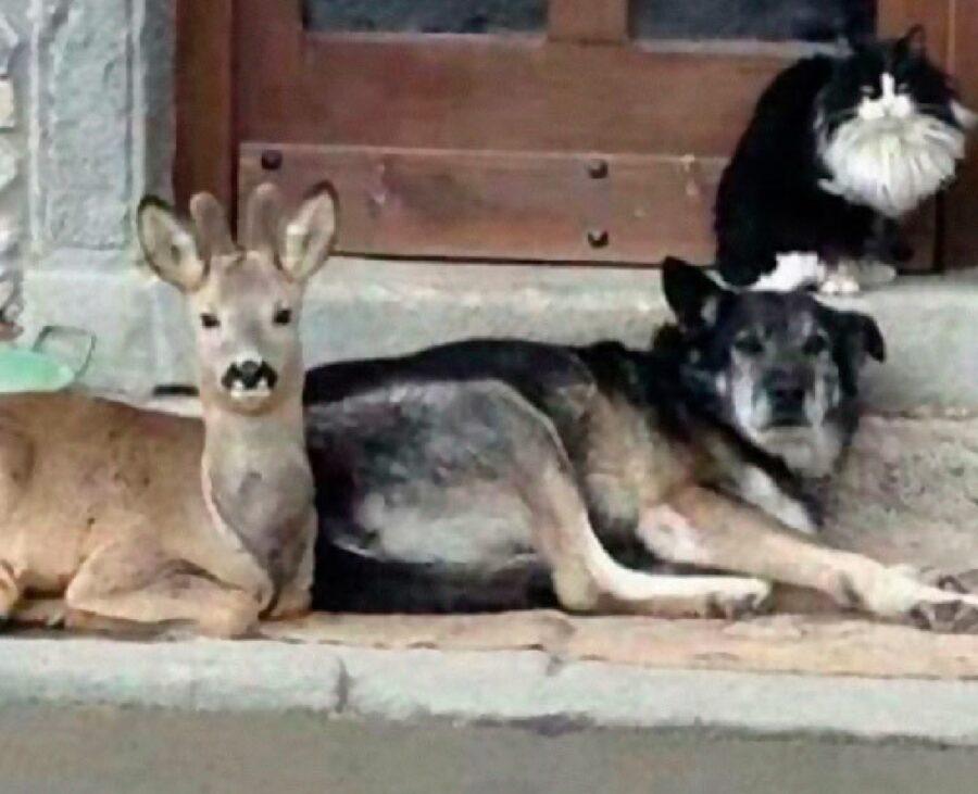 cane con altri animali