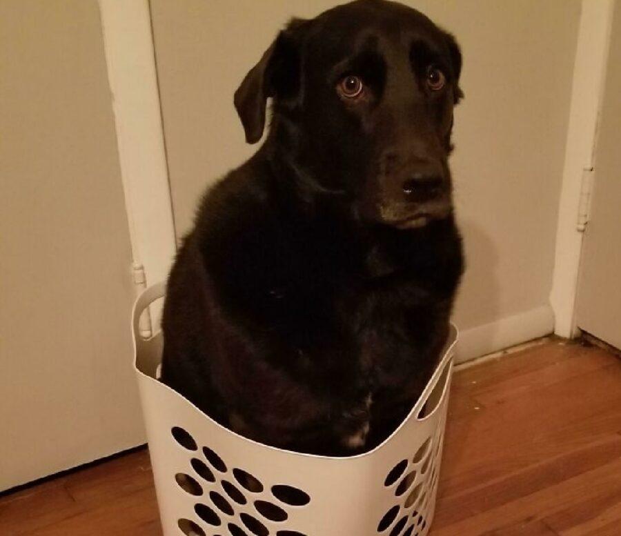 cane nero dentro cesta