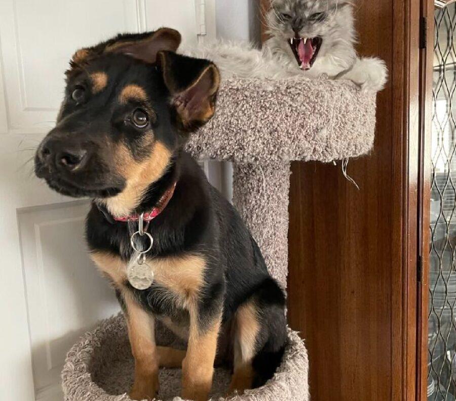 cane su albero felino