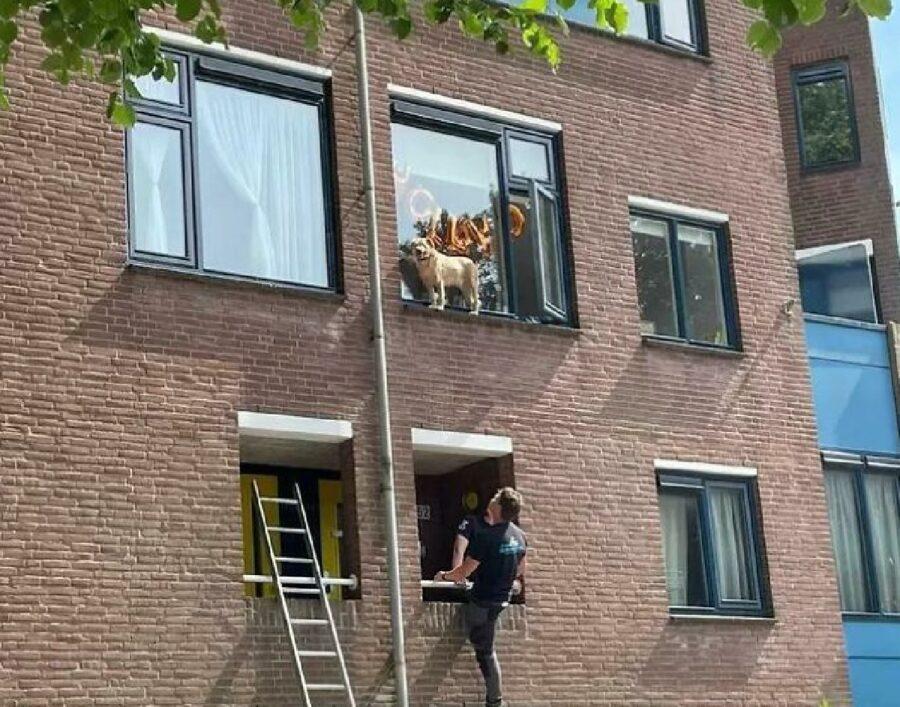 cane finito fuori da finestra