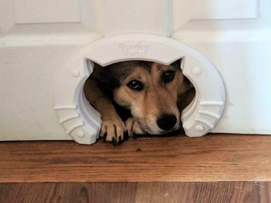 cane entrata del gatto