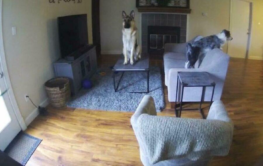 cane sul tavolino telecamera
