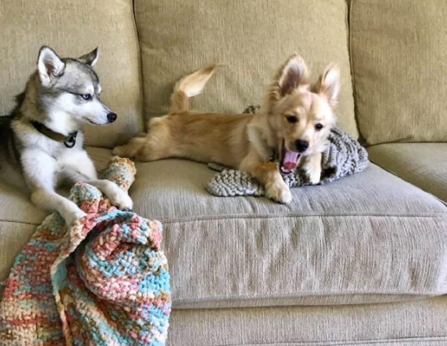 cucciolo di cane con coperta