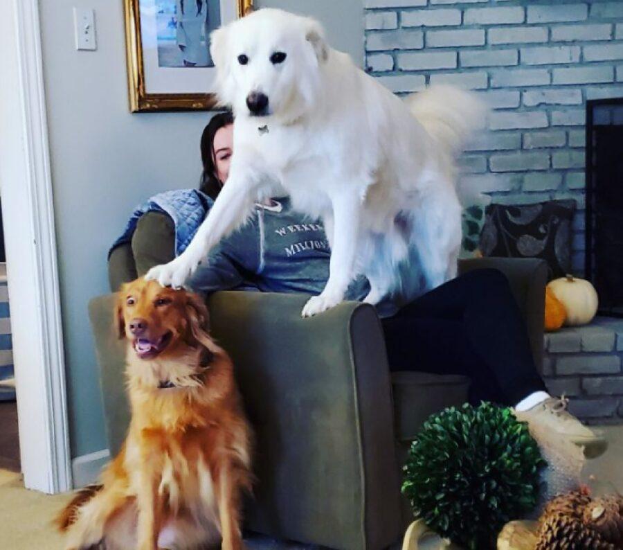 cane mette zampa su testa altro cane
