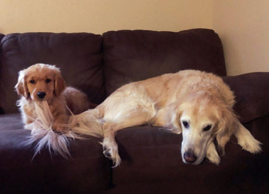 coppia cani seduta divano scuro