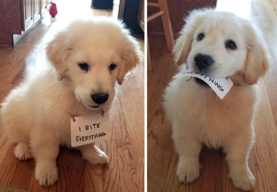 cane cartello bianco collo