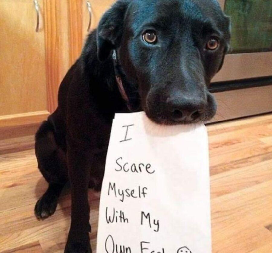 cane triste dispiaciuto sguardo