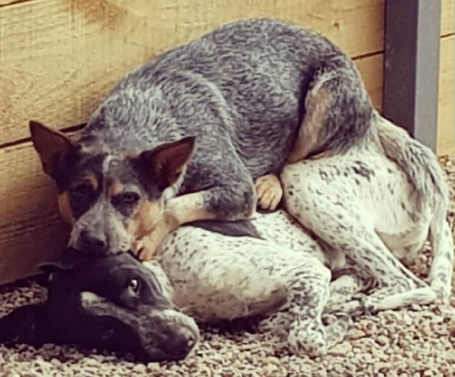 cane dorme su fratello