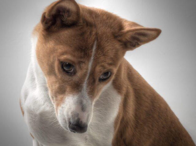 cani che rendono vita proprietari impegnativa