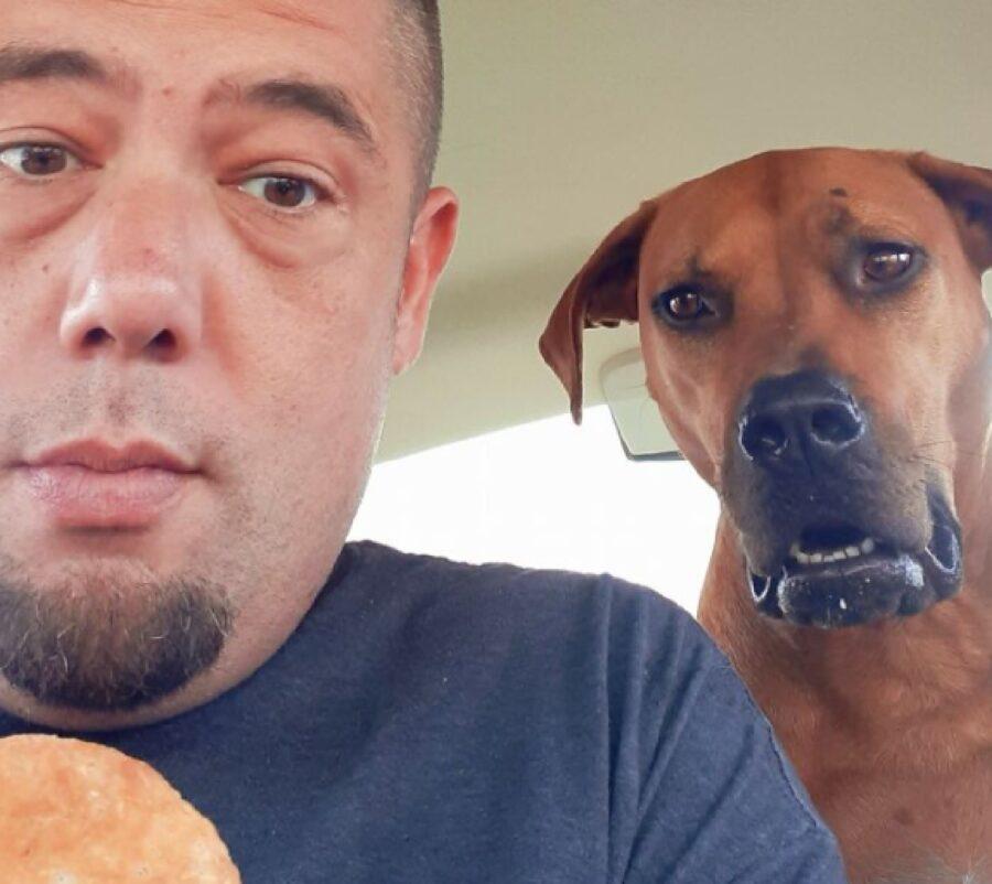cane vuole mangiare dolcetto