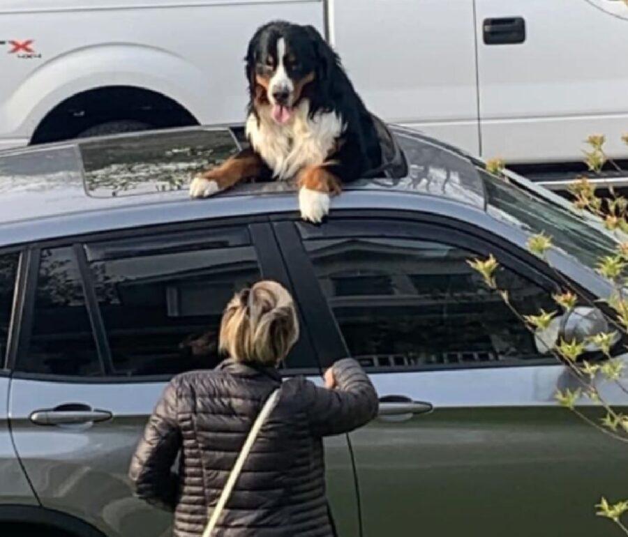 cane tettuccio automobile