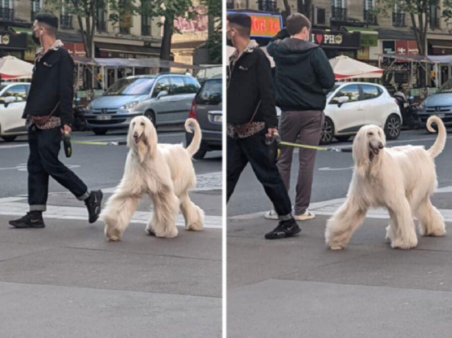 cane pelo lungo cammina strada