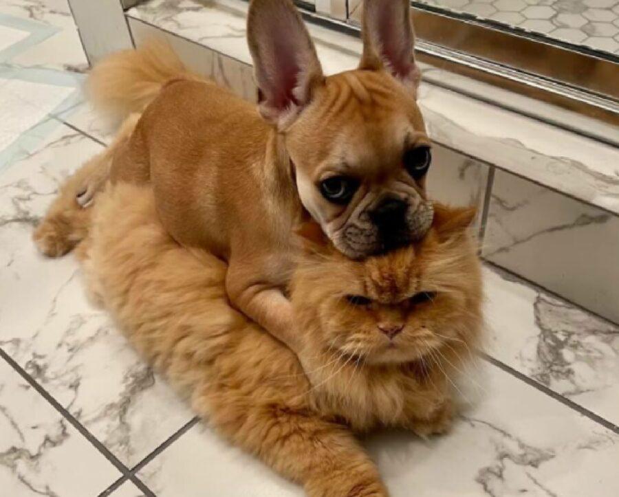 cane su gatto stesso colore