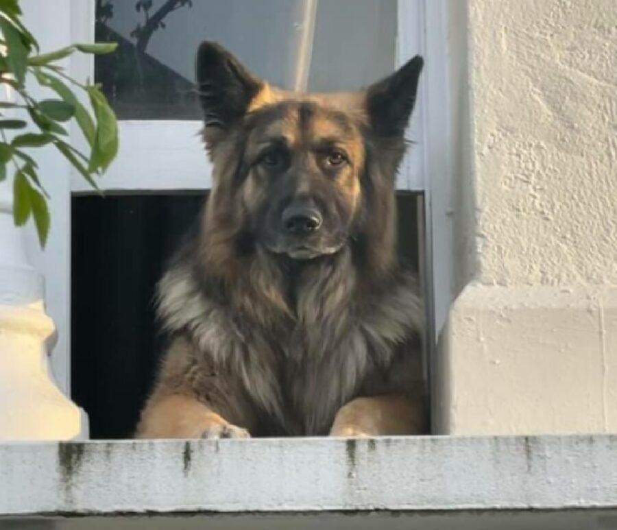 cane si affaccia da finestra