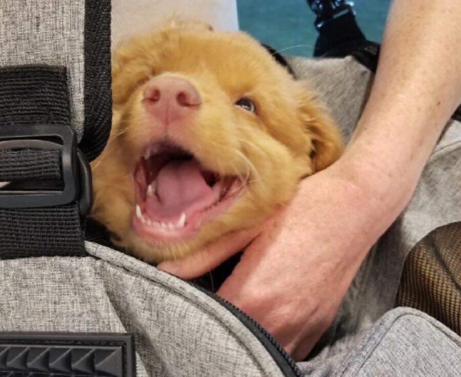 cane apre bocca grande