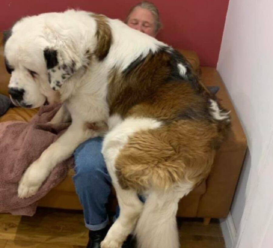 cane incredibilmente gigantesco