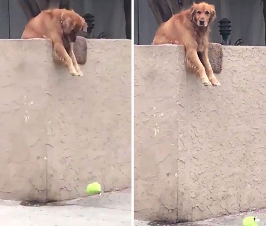 cane perde giocattolo