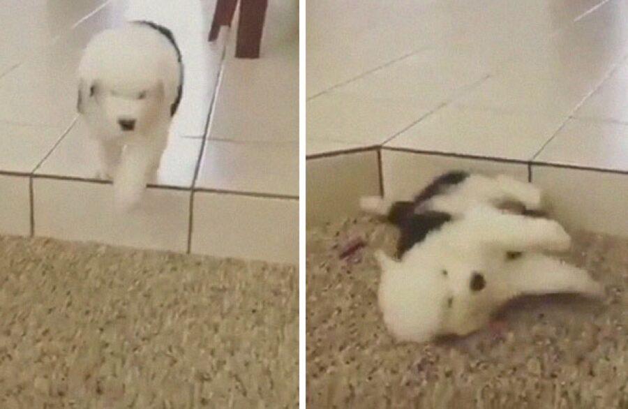 cane cade da gradino