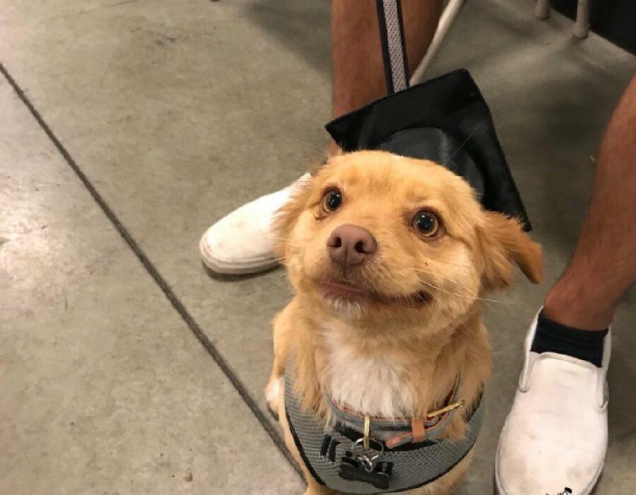 cagnolino laureato in qualcosa
