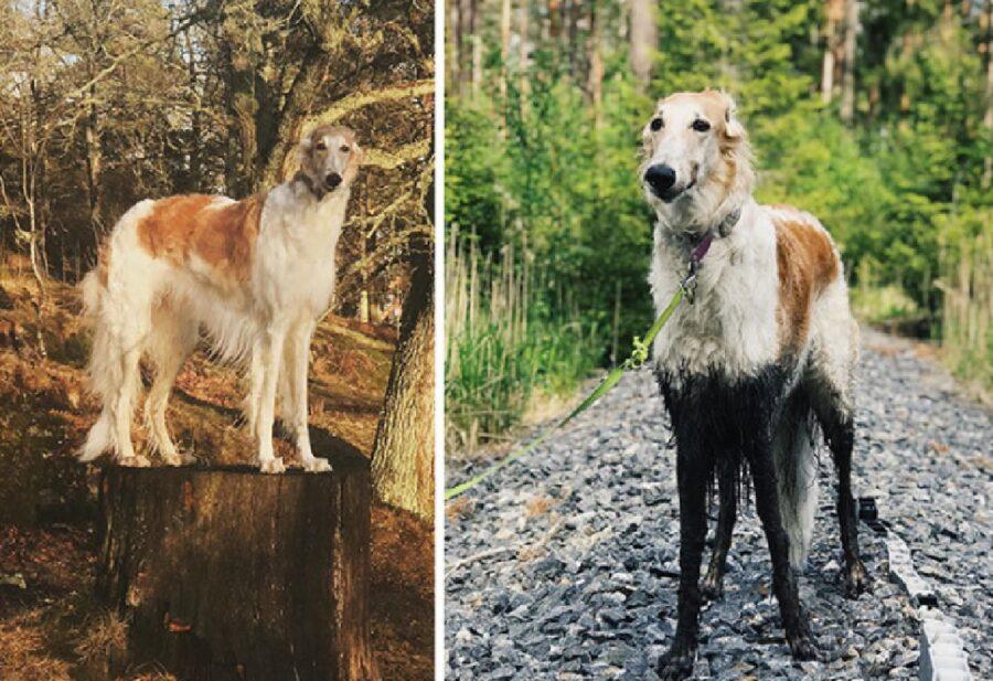 cane zampe sporche di fango