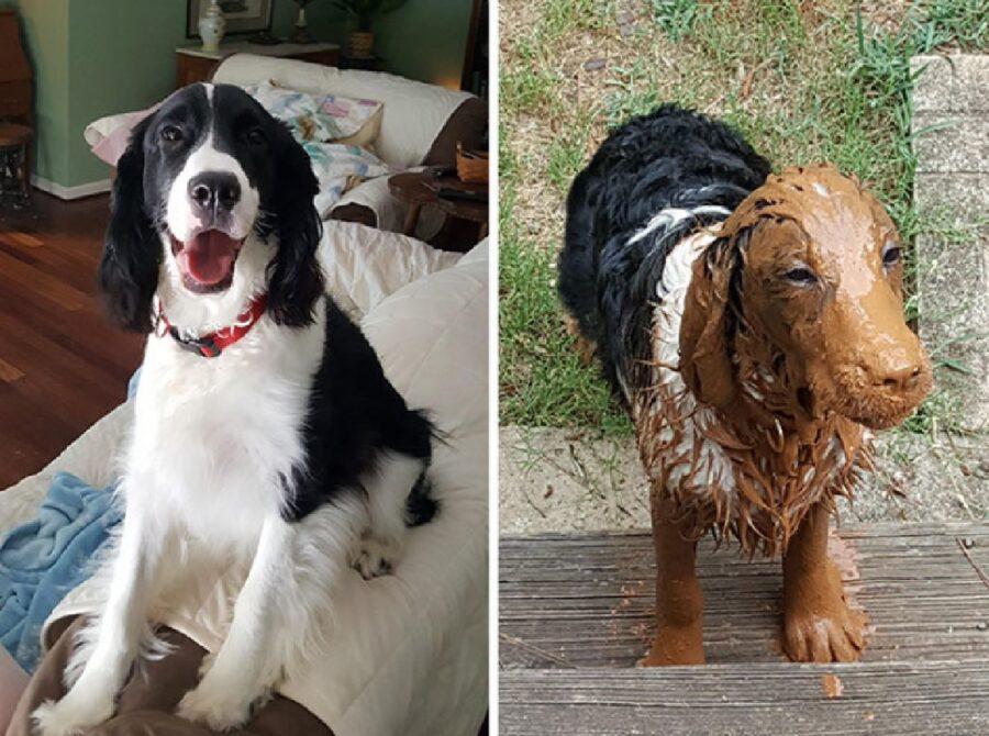 cane bianco e nero sporco
