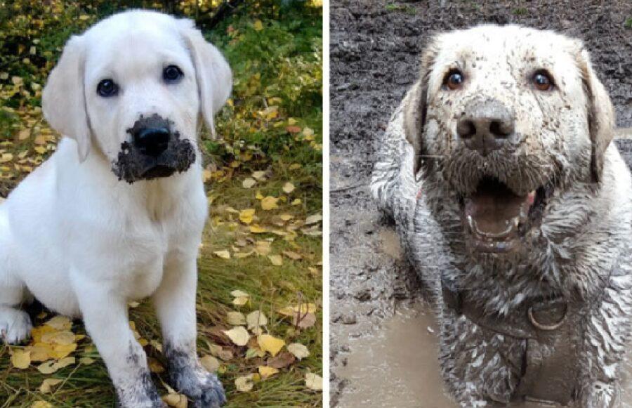 coppia cani fratelli fango