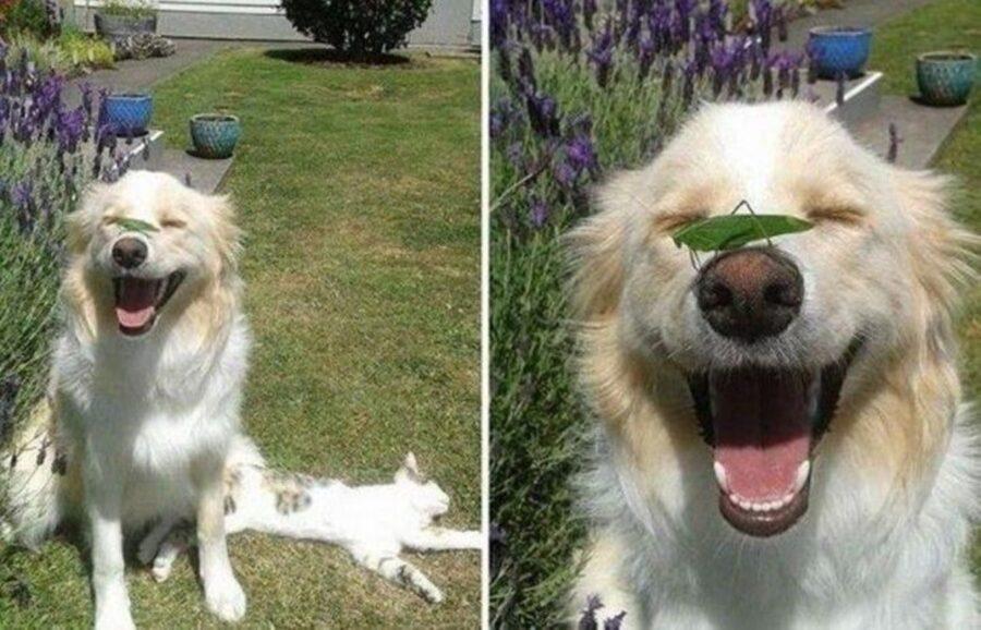 cane amico cavalletta