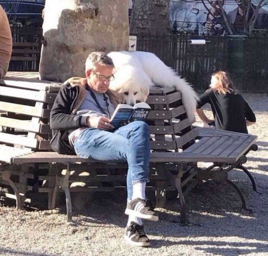 cane papà leggere