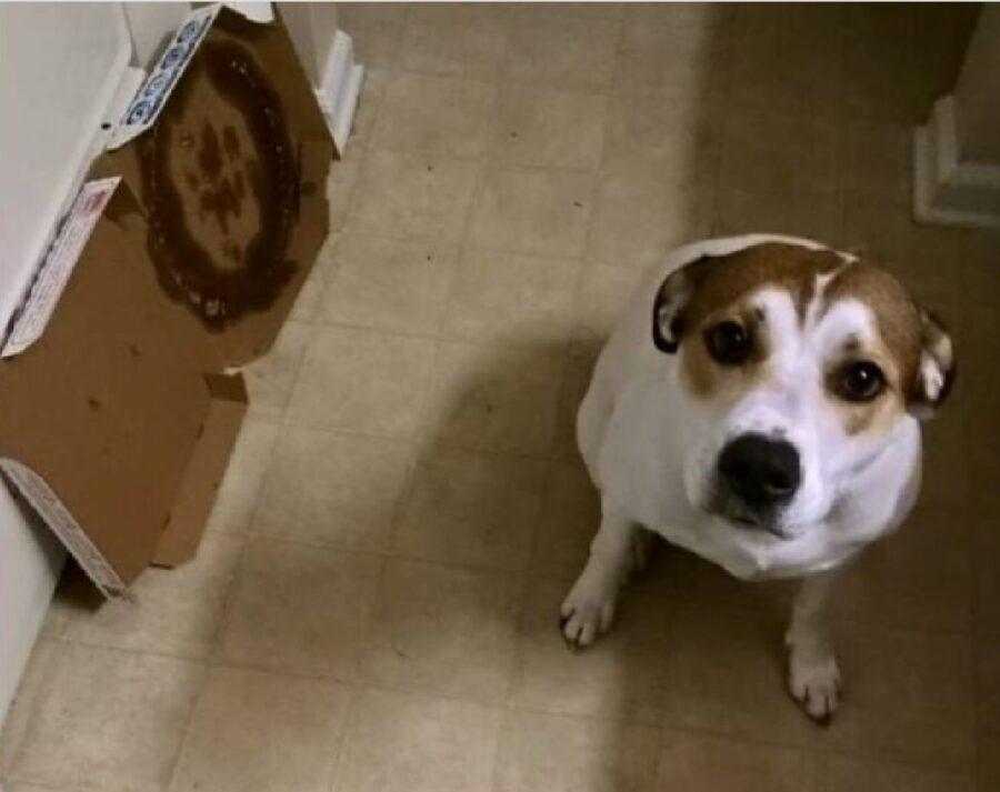 cane mangiatore di pizza seriale