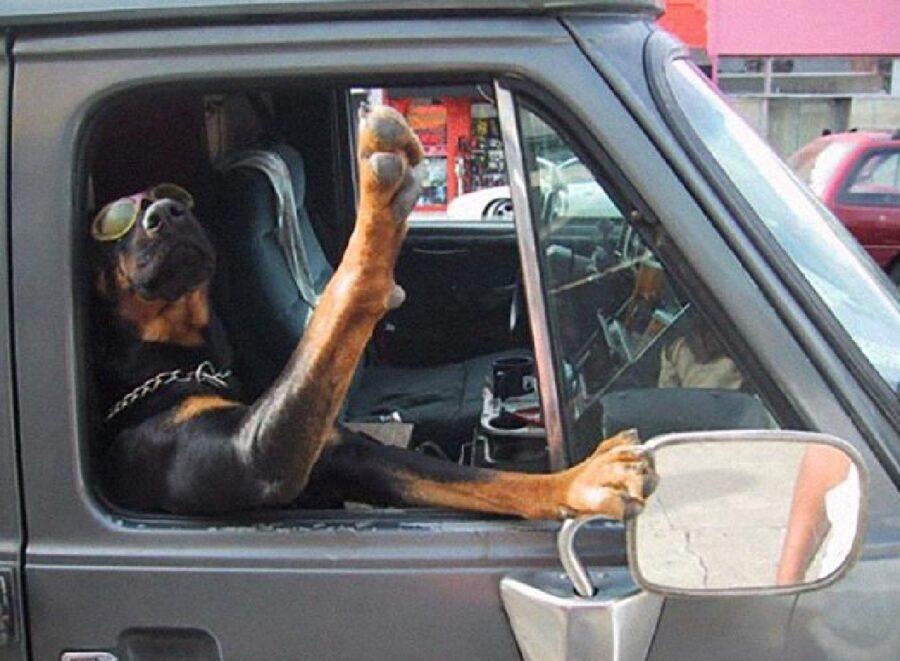 cane aggiusta specchietto
