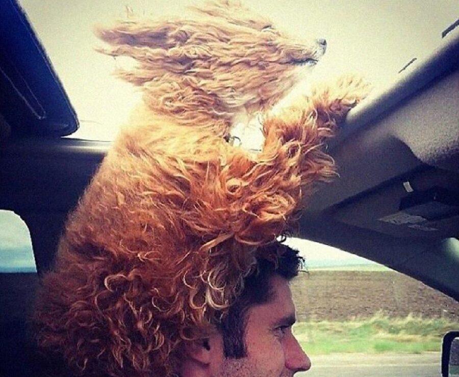 cane esce fuori auto con testa