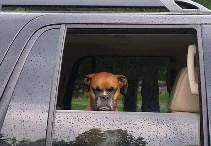 cane triste dietro finestrino