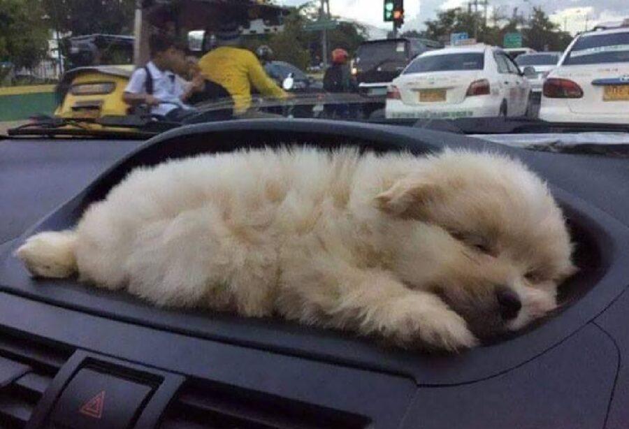 cucciolo davanti presa d'aria