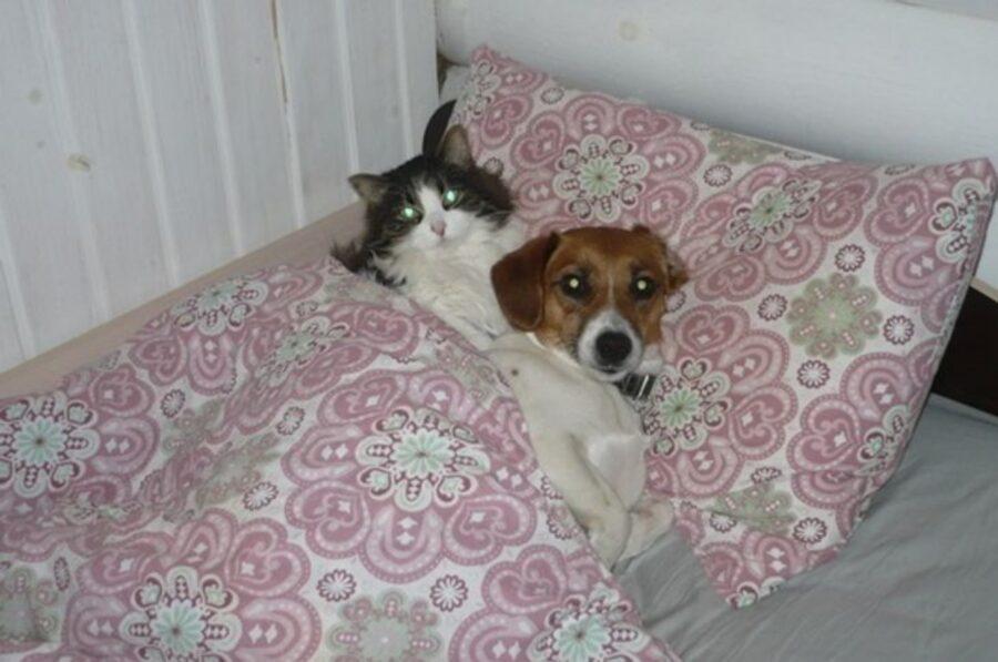 cucciolo micio letto