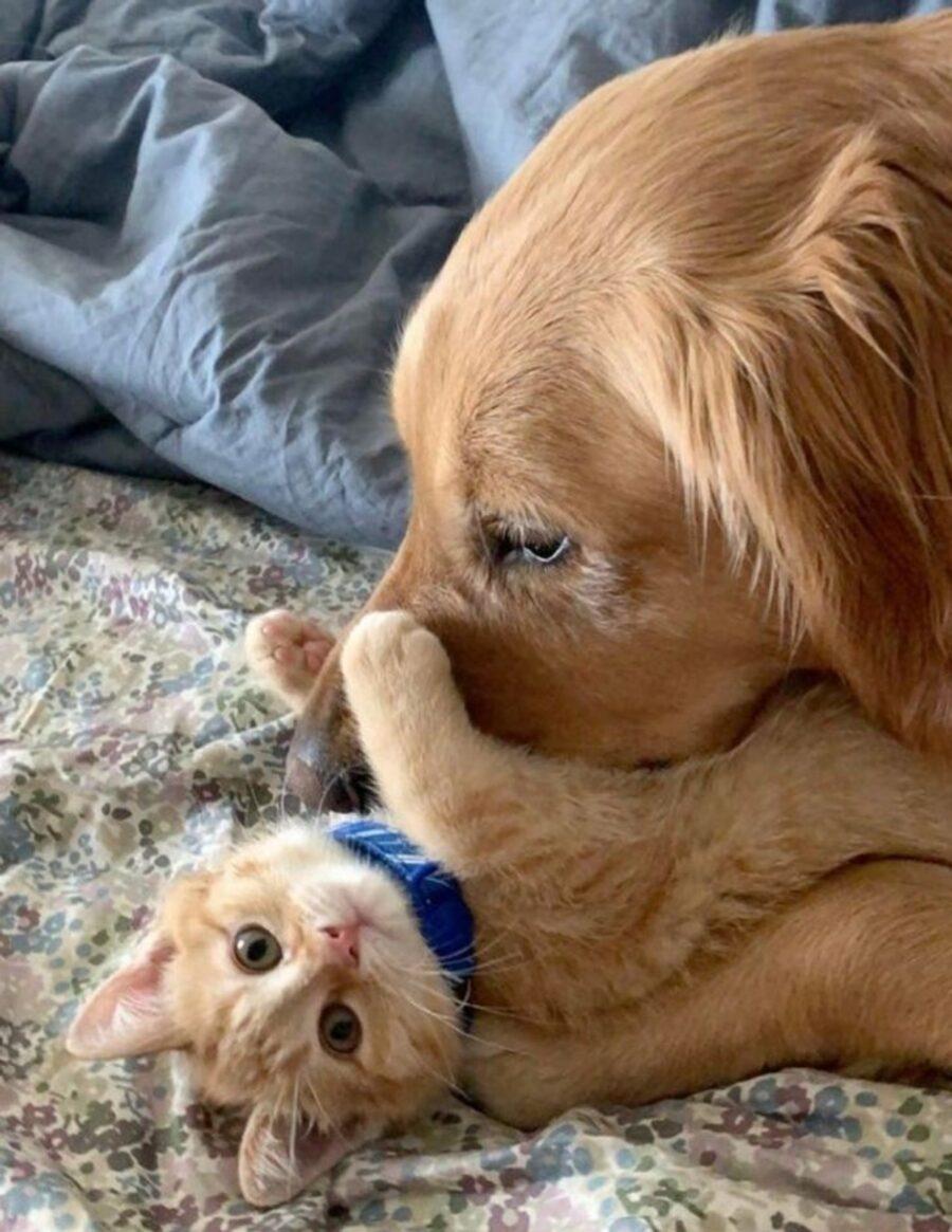 cane gioca muso