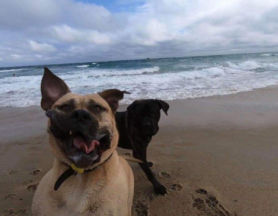 cane aria di mare effetto