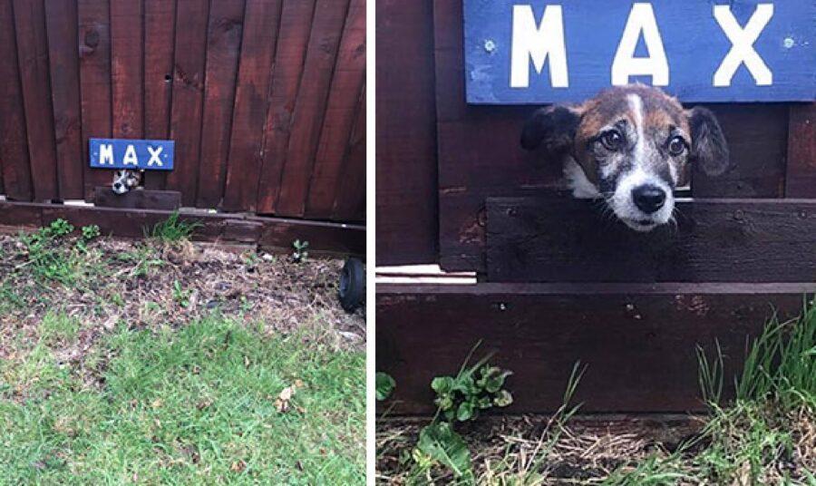 cucciolo di nome max targa