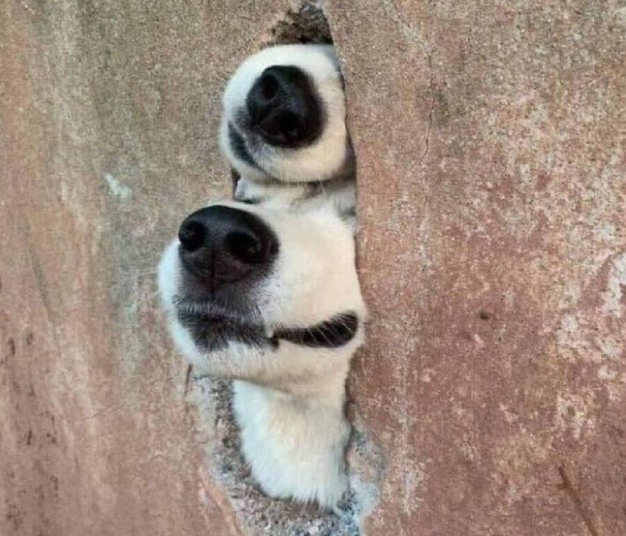 cani buco sul muro