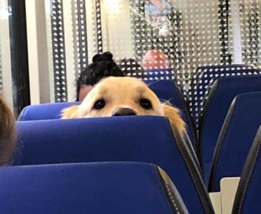 cane si affaccia sedile