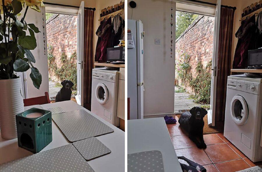 cane nero entra in casa