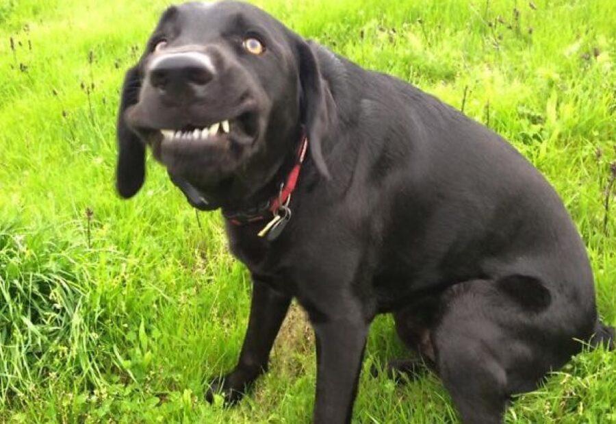 cane nero seduto su prato