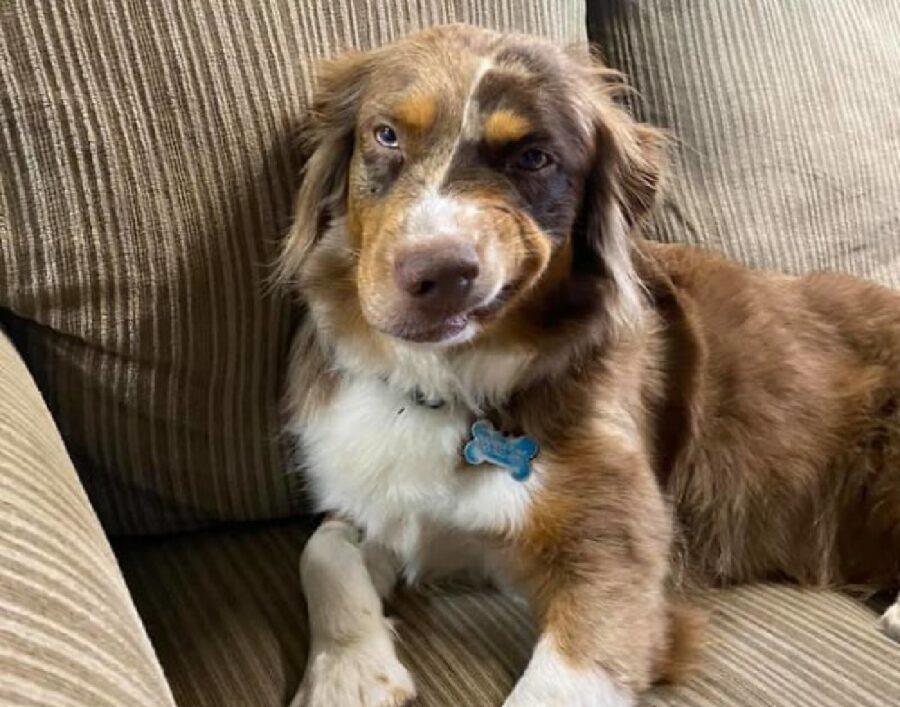 cane faccia di chi è sicuro propri mezzi