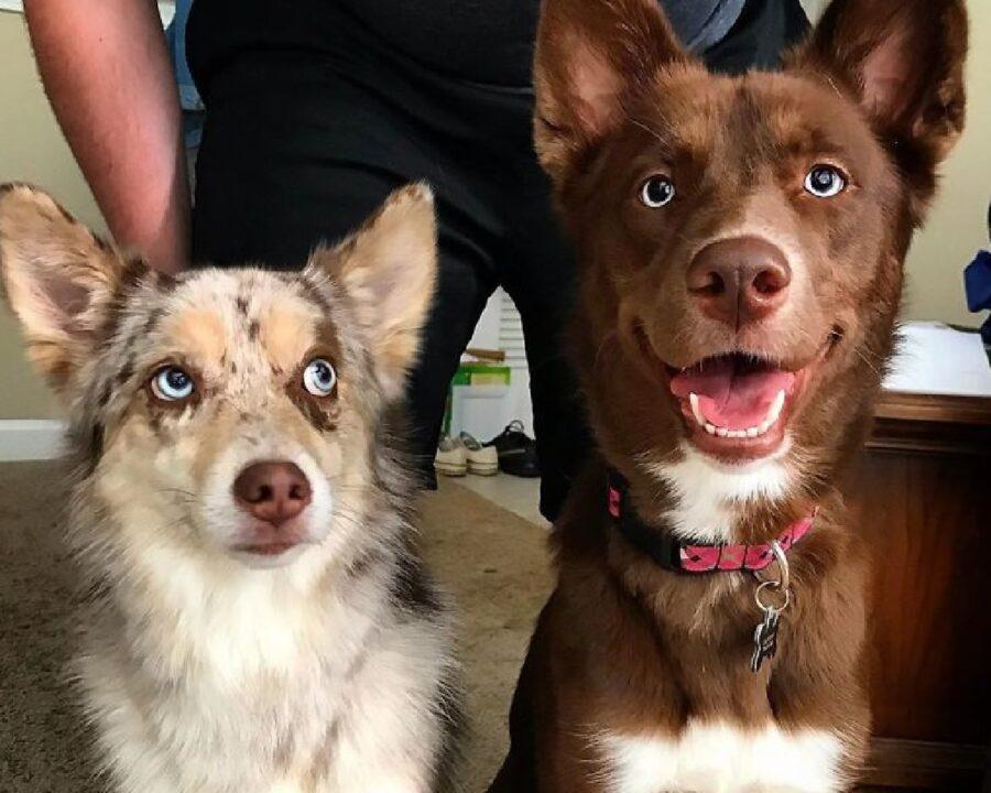 coppia cani uno sorridente